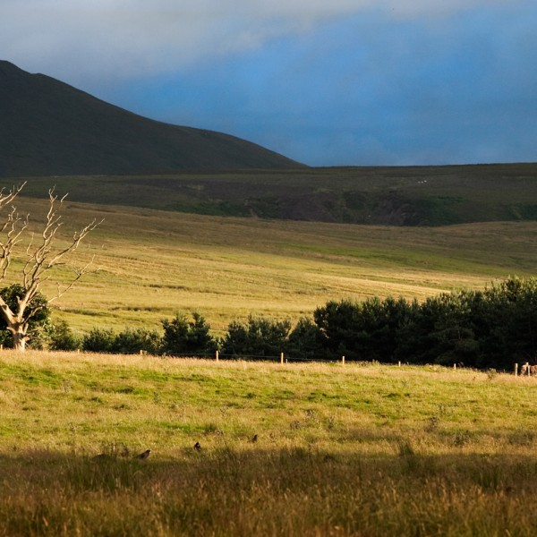 Moo Moos: the Pentlands Edinburgh