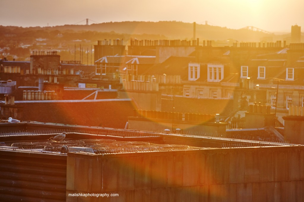 Sunset over city of Edinburgh with the birds resting in the roof tops